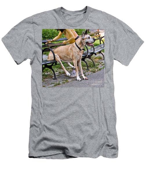 Great Dane Sitting On Park Bench Men's T-Shirt (Athletic Fit)