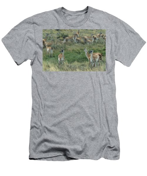 Guanacos In Patagonia, Chile Men's T-Shirt (Athletic Fit)