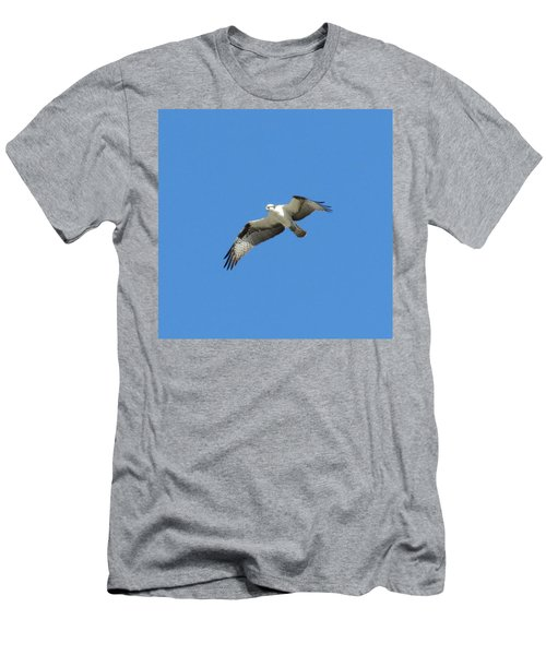 Hawk In Flight Men's T-Shirt (Athletic Fit)