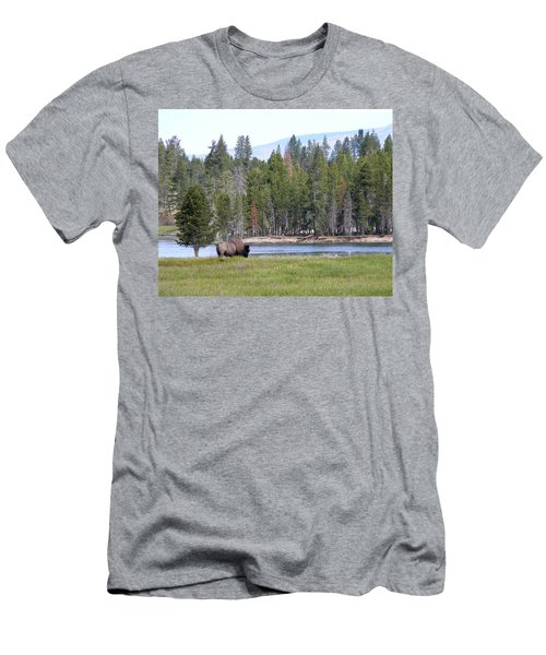 Hayden Valley Bison Men's T-Shirt (Slim Fit) by Laurel Powell