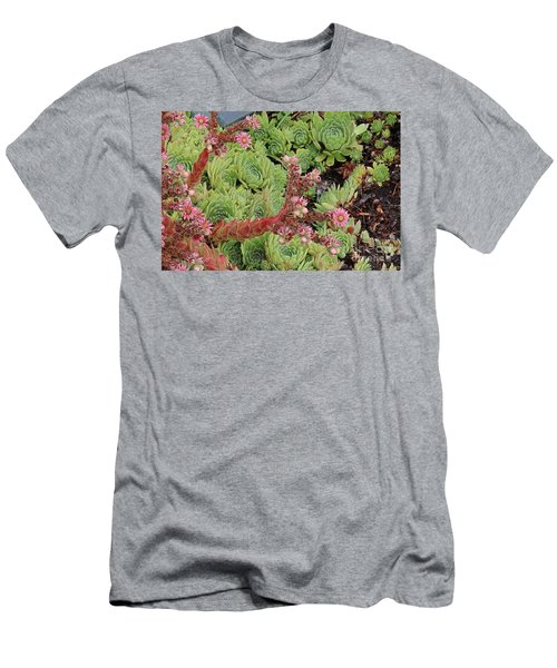 Hen And Chick In Bloom Men's T-Shirt (Athletic Fit)