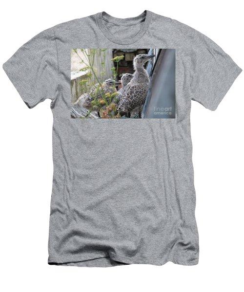 Herring Gull Chicks Men's T-Shirt (Athletic Fit)