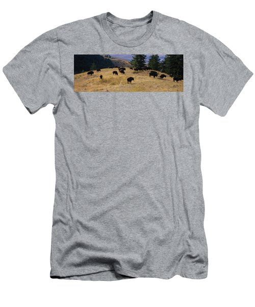 High Angle View Of Bisons Grazing Men's T-Shirt (Athletic Fit)