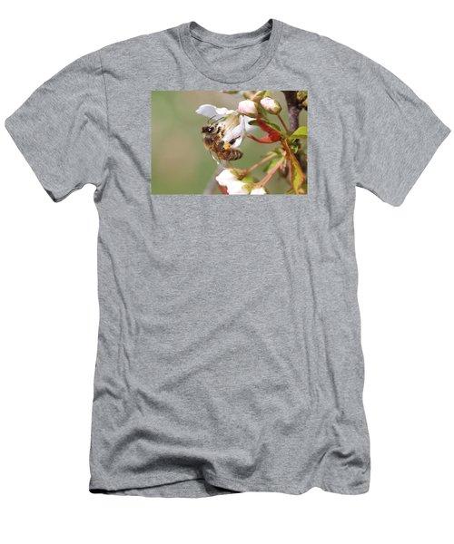 Honeybee On Cherry Blossom Men's T-Shirt (Slim Fit) by Lucinda VanVleck