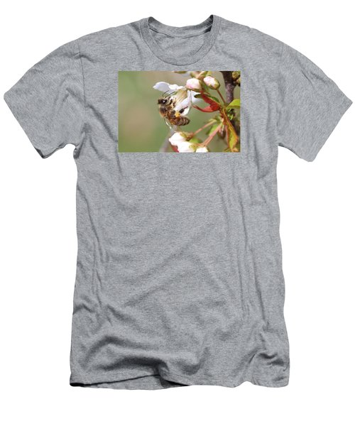 Honeybee On Cherry Blossom Men's T-Shirt (Athletic Fit)