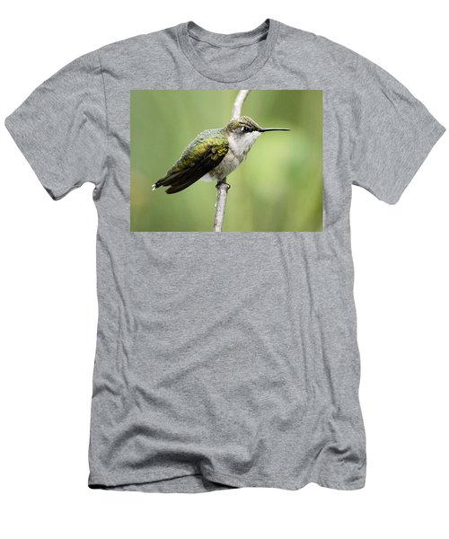 Hummingbird 3 Men's T-Shirt (Slim Fit) by Bonfire Photography