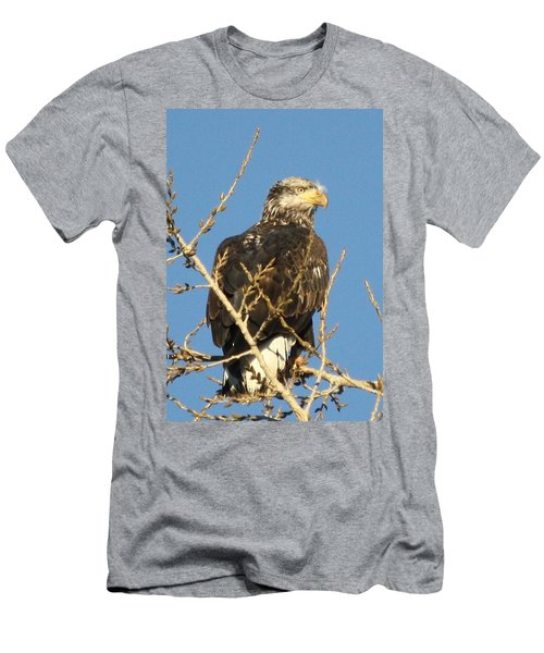 Immature Bald Eagle Men's T-Shirt (Athletic Fit)