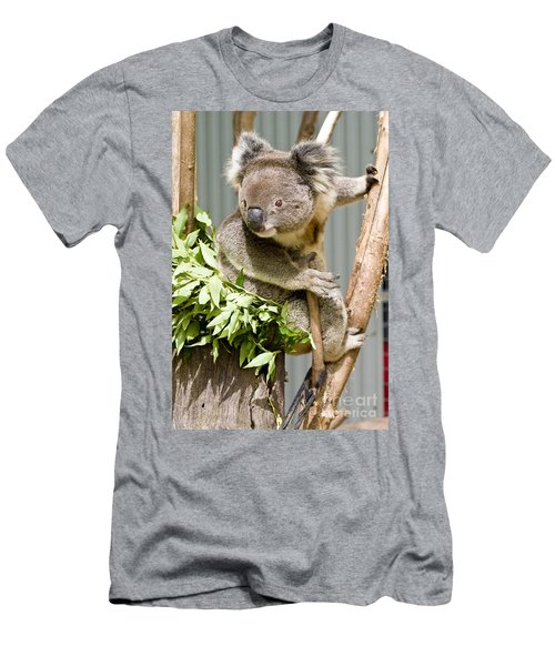 Koala Men's T-Shirt (Athletic Fit)
