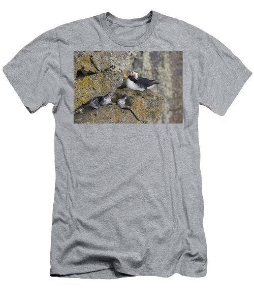 Least Auklets Perched On A Narrow Ledge Men's T-Shirt (Athletic Fit)