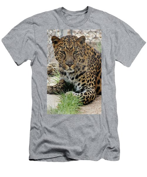 Leopard Lounging 1 Men's T-Shirt (Athletic Fit)