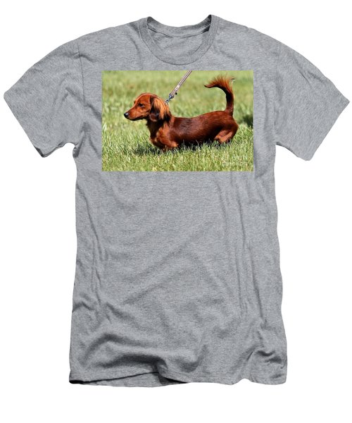 Long Haired Dachshund Men's T-Shirt (Athletic Fit)
