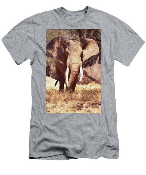 Mana Pools Elephant Men's T-Shirt (Athletic Fit)