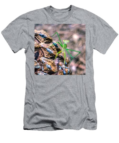 Mantis On A Pine Cone Men's T-Shirt (Athletic Fit)