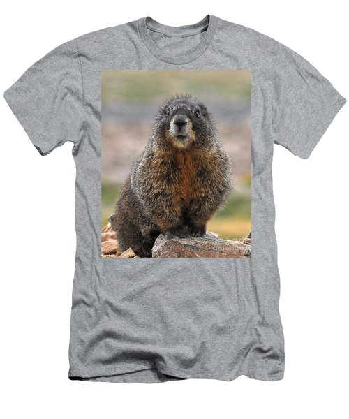 Men's T-Shirt (Athletic Fit) featuring the photograph Marmot by Mae Wertz