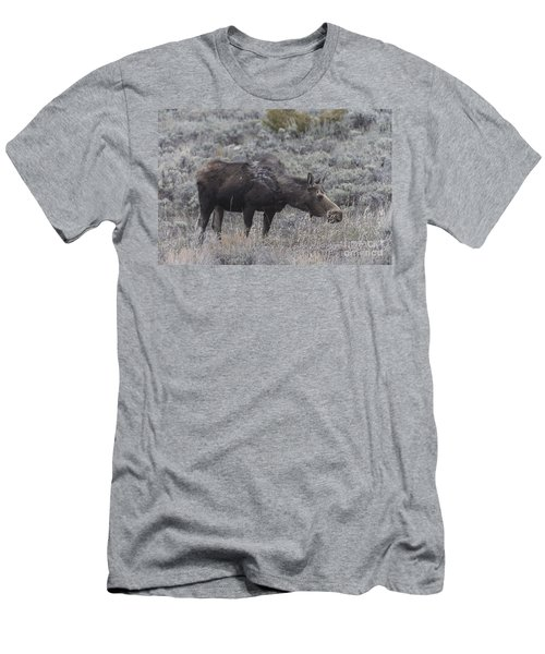 A Grazing Moose Men's T-Shirt (Athletic Fit)