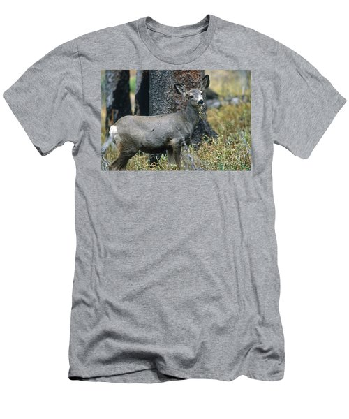 Mule Deer In Yellowstone Men's T-Shirt (Athletic Fit)