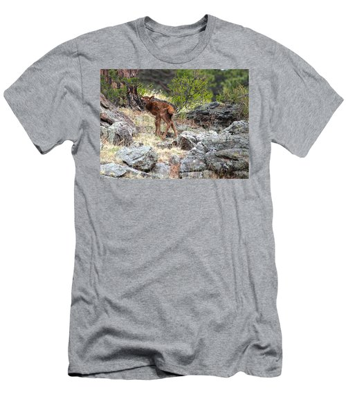 Newborn Elk Calf Men's T-Shirt (Athletic Fit)