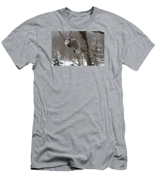 Opossum In A Tree Men's T-Shirt (Slim Fit) by Lucinda VanVleck
