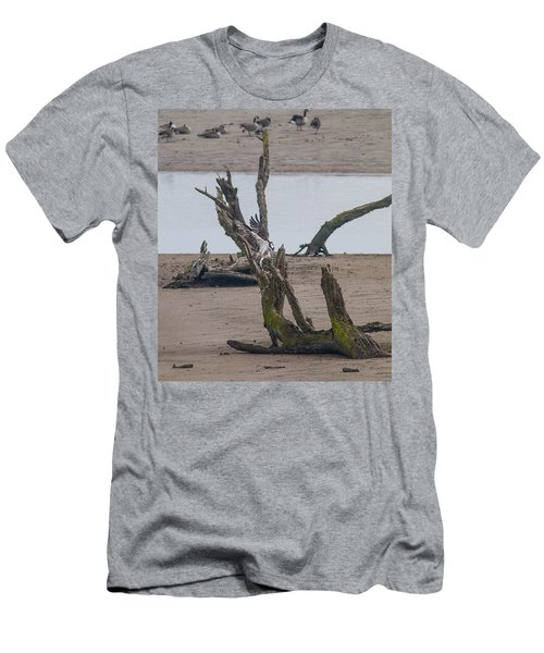 Ospray With Fish Men's T-Shirt (Athletic Fit)