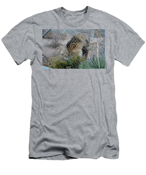 Out Of Africa Lions 4 Men's T-Shirt (Athletic Fit)