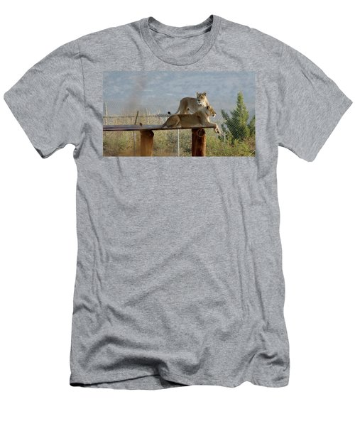 Out Of Africa Lions Men's T-Shirt (Athletic Fit)