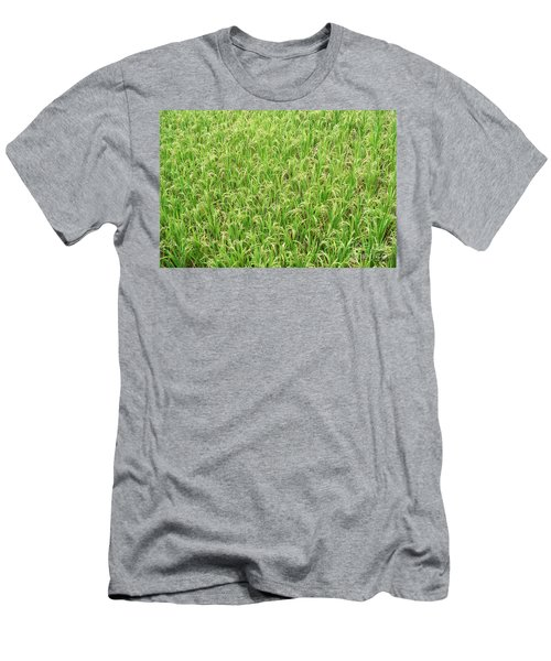 Men's T-Shirt (Slim Fit) featuring the photograph Paddy Field by Yew Kwang