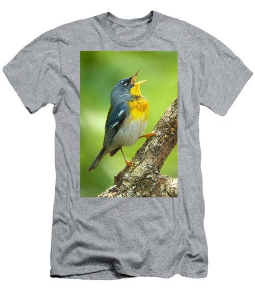 Parula Song Men's T-Shirt (Athletic Fit)