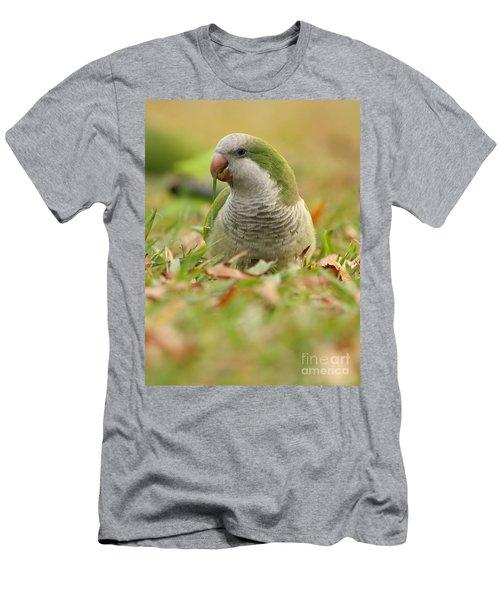 Quaker Parrot #3 Men's T-Shirt (Athletic Fit)