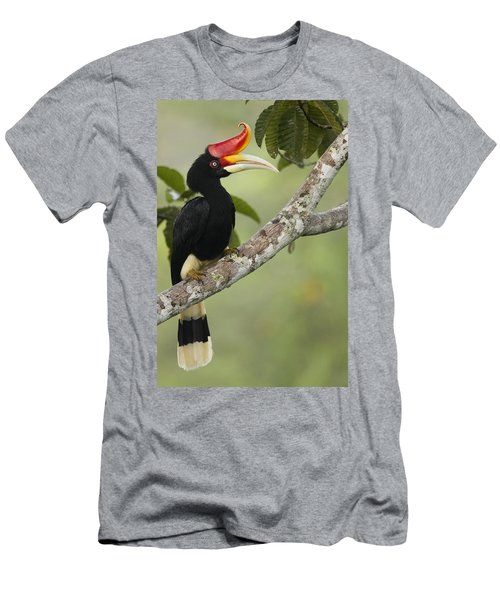 Rhinoceros Hornbill Female Sepilok Men's T-Shirt (Athletic Fit)