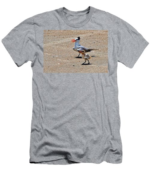 Royal Tern With Chick Men's T-Shirt (Athletic Fit)
