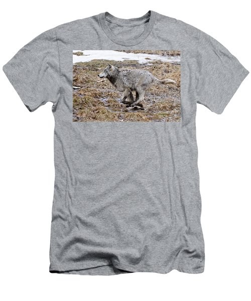 Men's T-Shirt (Slim Fit) featuring the photograph Running Timber Wolf by Wolves Only