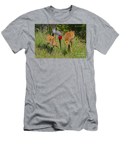 Sandhill Crane Family Feeding Men's T-Shirt (Athletic Fit)