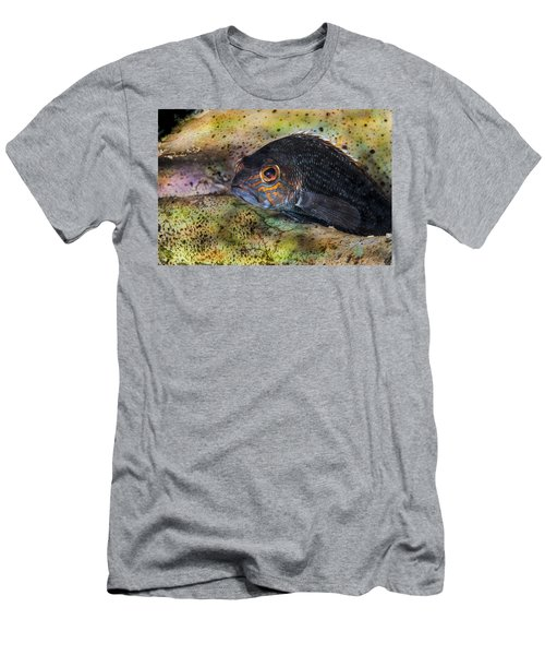 Seabass In A Shell Men's T-Shirt (Athletic Fit)