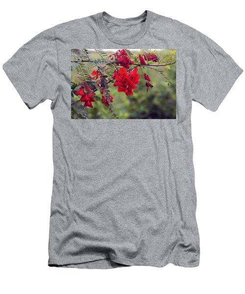 Sesbania Punicea Men's T-Shirt (Athletic Fit)