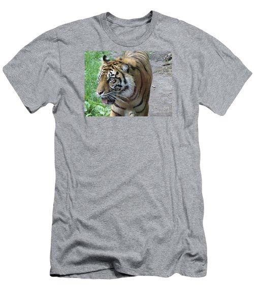 Men's T-Shirt (Slim Fit) featuring the photograph Siberian Tiger by Lingfai Leung