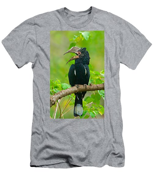 Silvery-cheeked Hornbill Perching Men's T-Shirt (Athletic Fit)