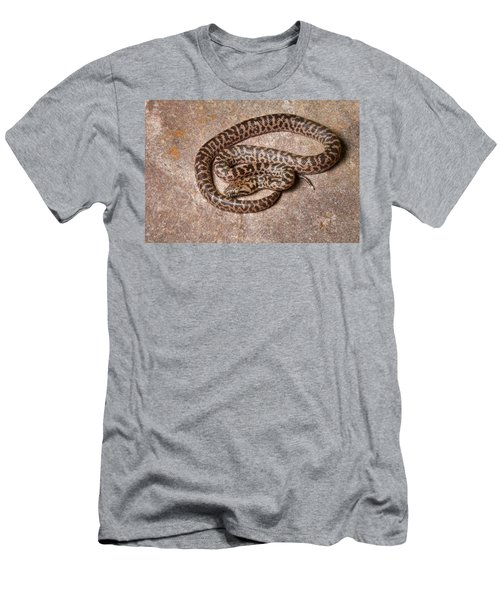 Spotted Python Antaresia Maculosa Men's T-Shirt (Athletic Fit)