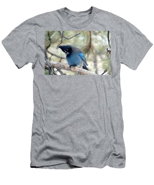 Steller's Jay Looking Down Men's T-Shirt (Athletic Fit)