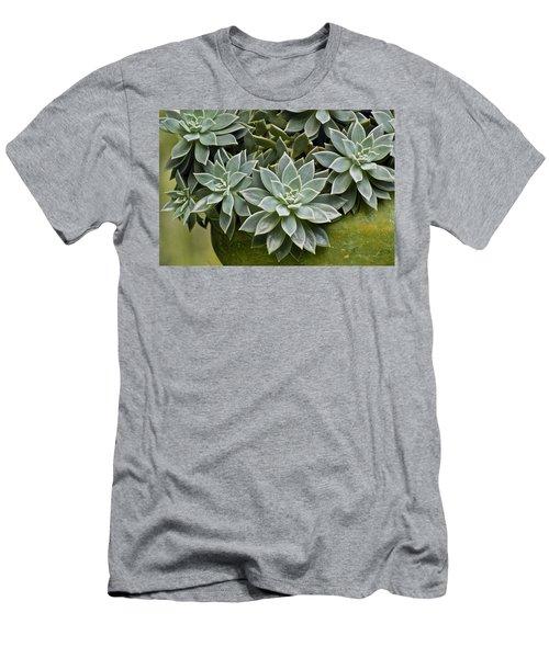 Succulent Rose In Moss Green Pot Men's T-Shirt (Athletic Fit)