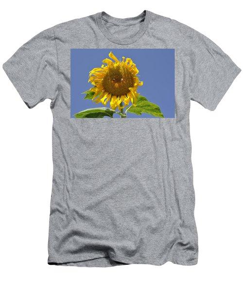 Sunflower At Latrun Men's T-Shirt (Athletic Fit)