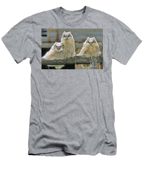Three Great-horned Owl Chicks Men's T-Shirt (Athletic Fit)