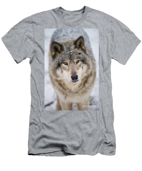 Timber Wolf Pictures 254 Men's T-Shirt (Athletic Fit)