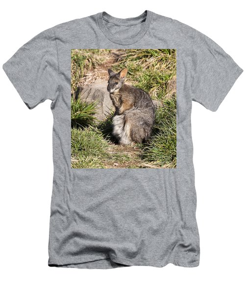 Wallaby Men's T-Shirt (Athletic Fit)