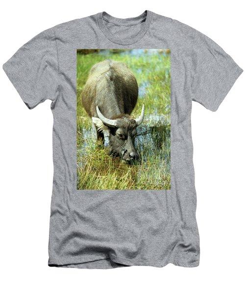 Water Buffalo Men's T-Shirt (Athletic Fit)