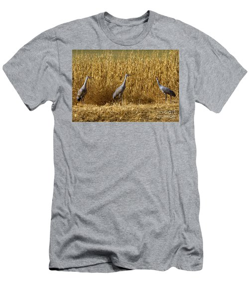 Where Is The Corn Men's T-Shirt (Athletic Fit)
