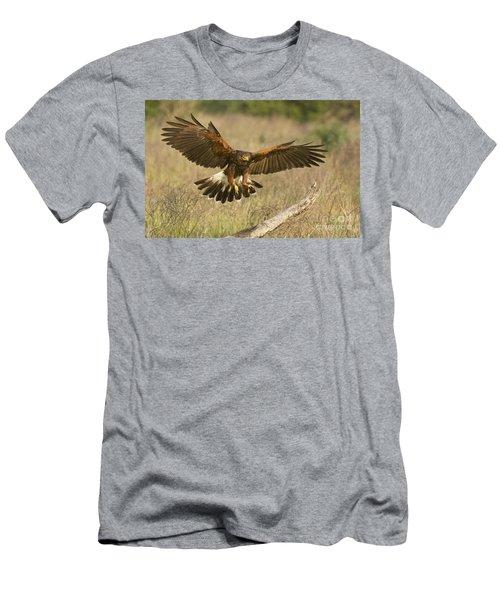 Wild Harris Hawk Landing Men's T-Shirt (Slim Fit) by Dave Welling