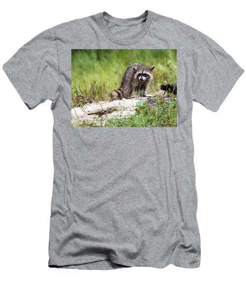 Young Raccoon Men's T-Shirt (Athletic Fit)