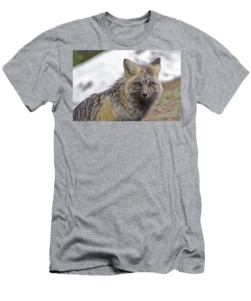 Cascade Red Fox Men's T-Shirt (Athletic Fit)