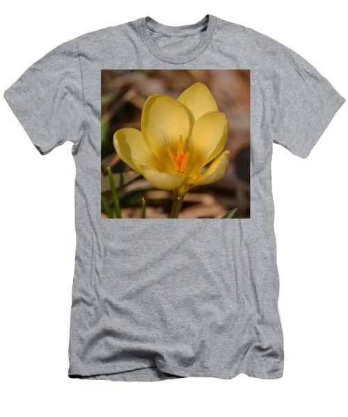 Yellow Crocus Men's T-Shirt (Athletic Fit)