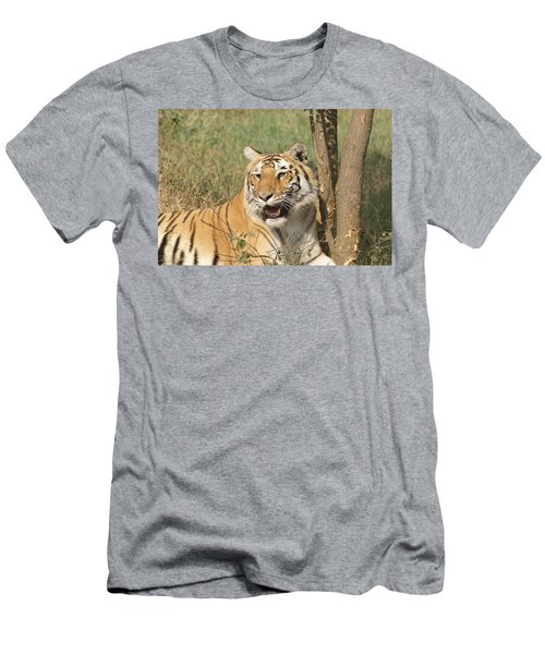 A Tiger Lying Casually But Fully Alert Men's T-Shirt (Athletic Fit)